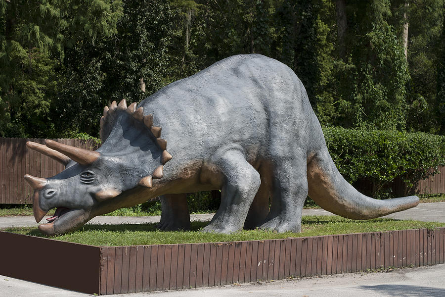 Dinosaur Photograph - Triceratops by Carl Purcell