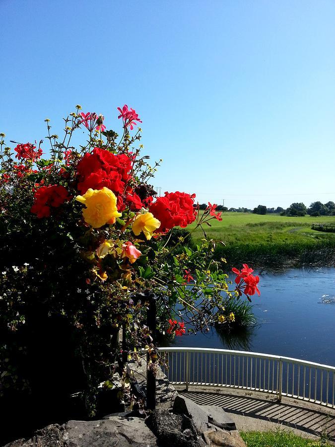Floral Photograph - Trim Florals by Martine Murphy