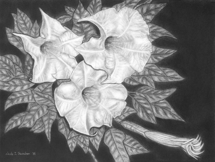 Flowers Drawing - Trio Of Heavenly Blossoms by Nicole I Hamilton