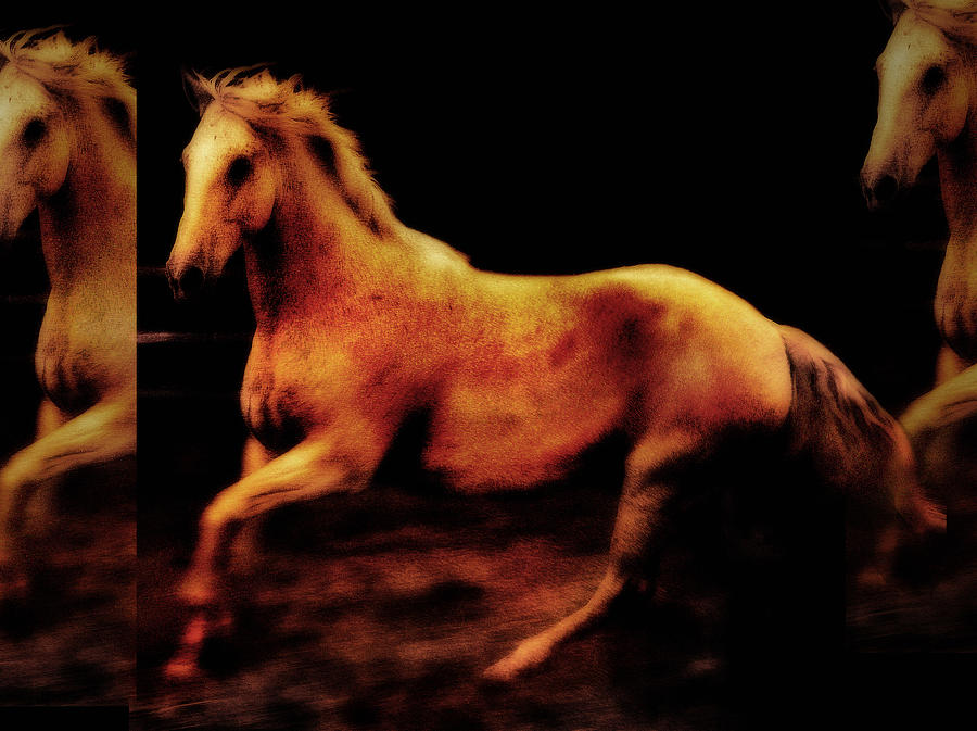 Horses Photograph - Triple Horse by Nick Sokoloff