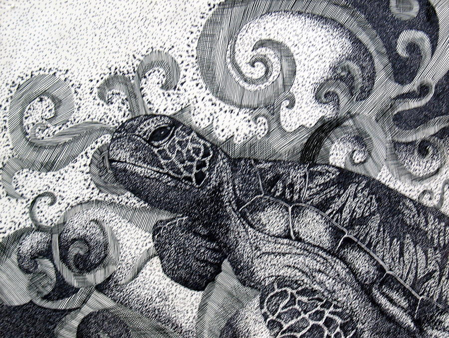 Trippy Turtle Drawing by Carolann Shubert