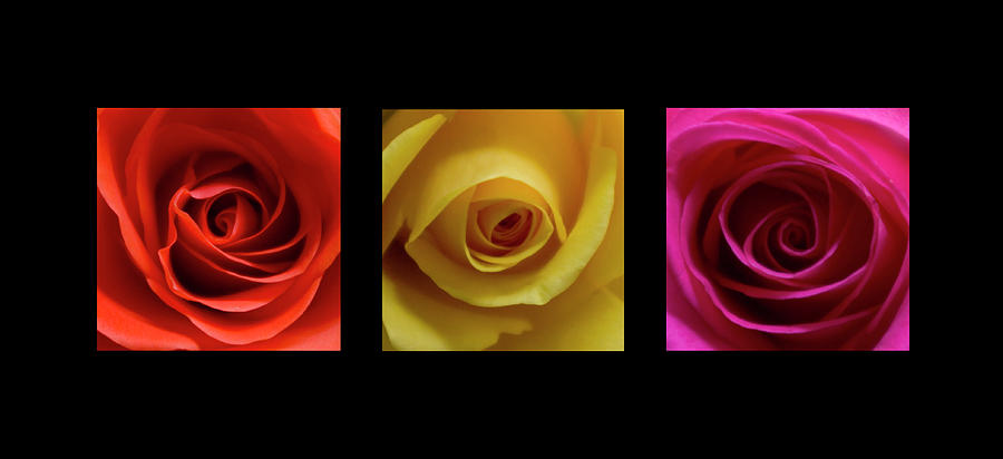Triptych Photograph - Triptych Roses by Pixie Copley