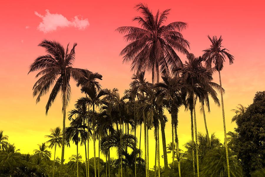 Summer Photograph - Tropical 9 by Mark Ashkenazi