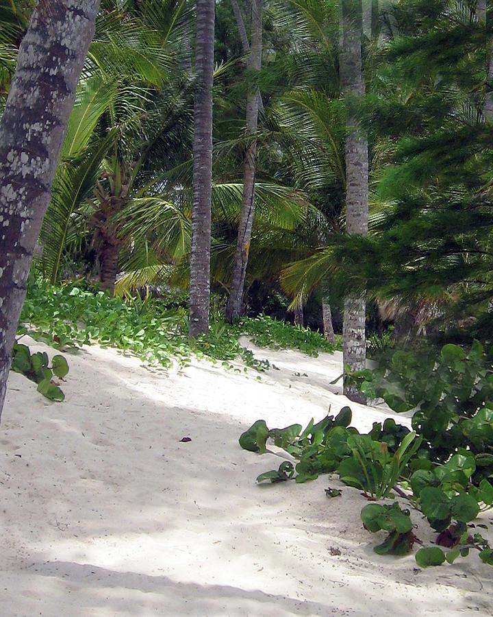Tropical Beach Photograph by Bruce Gaynor