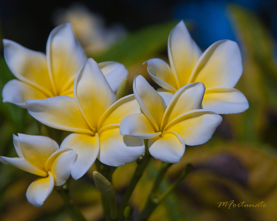 TROPICAL BLOOMS by Margaret Fortunato