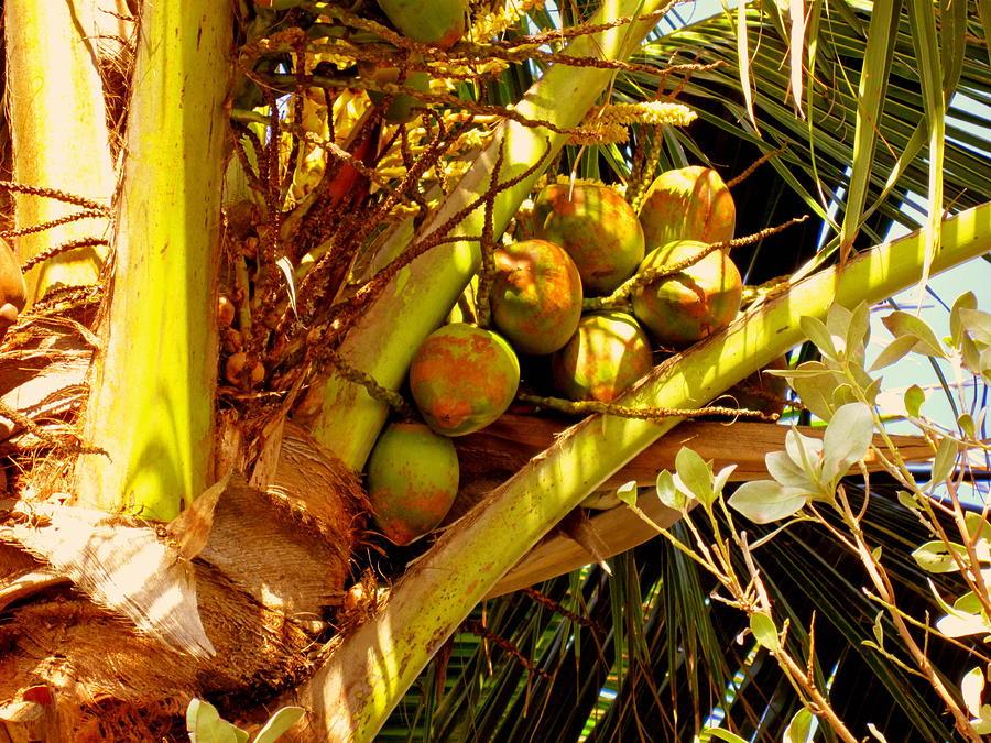 Coconuts Photograph - Tropical Dreams 1 by Susanne Van Hulst