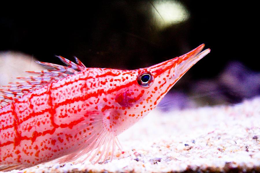 Fish Photograph - Tropical Fish by Brenton Woodruff