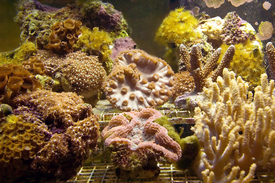Fish Photograph - Tropical Fish Tank 10 by Steve Ohlsen