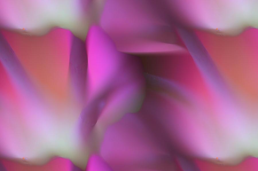Flower Photograph - Tropical Flower by Silke Magino