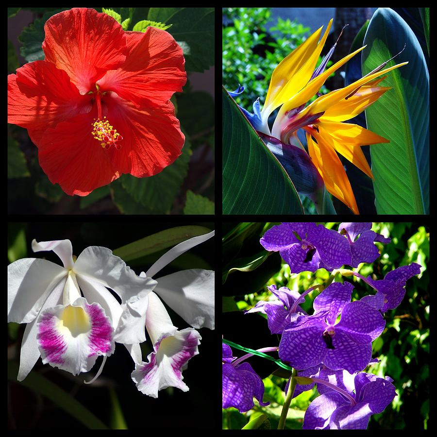 Multiples Photograph - Tropical Flowers Multiples by Susanne Van Hulst