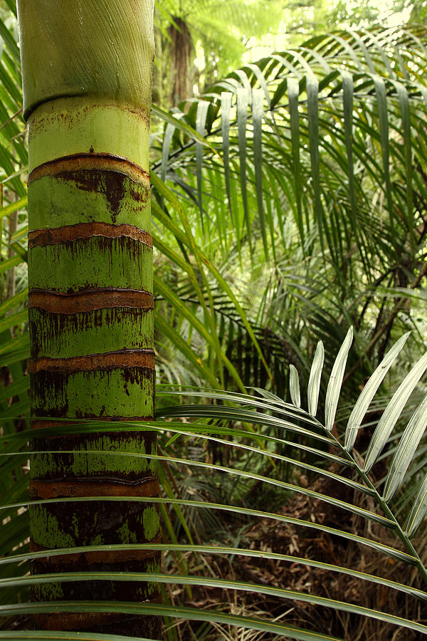 Bush Photograph - Tropical Forest Jungle by Les Cunliffe