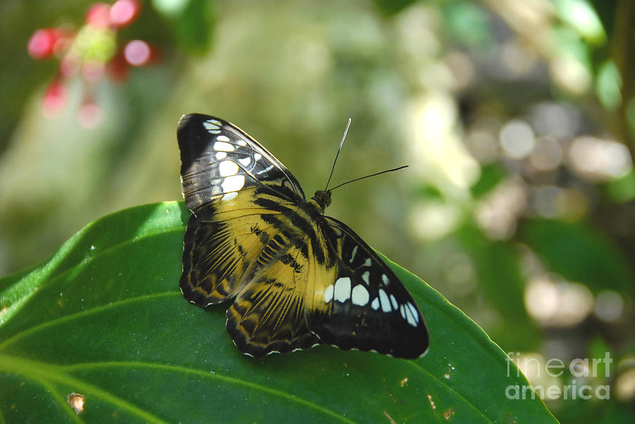 Butterfly Photograph - Tropical Garden Beauty by David Lee Thompson