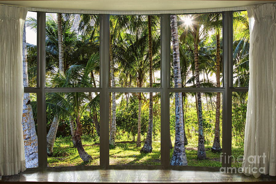 Tropical Jungle Reflections Bay Window View Photograph By