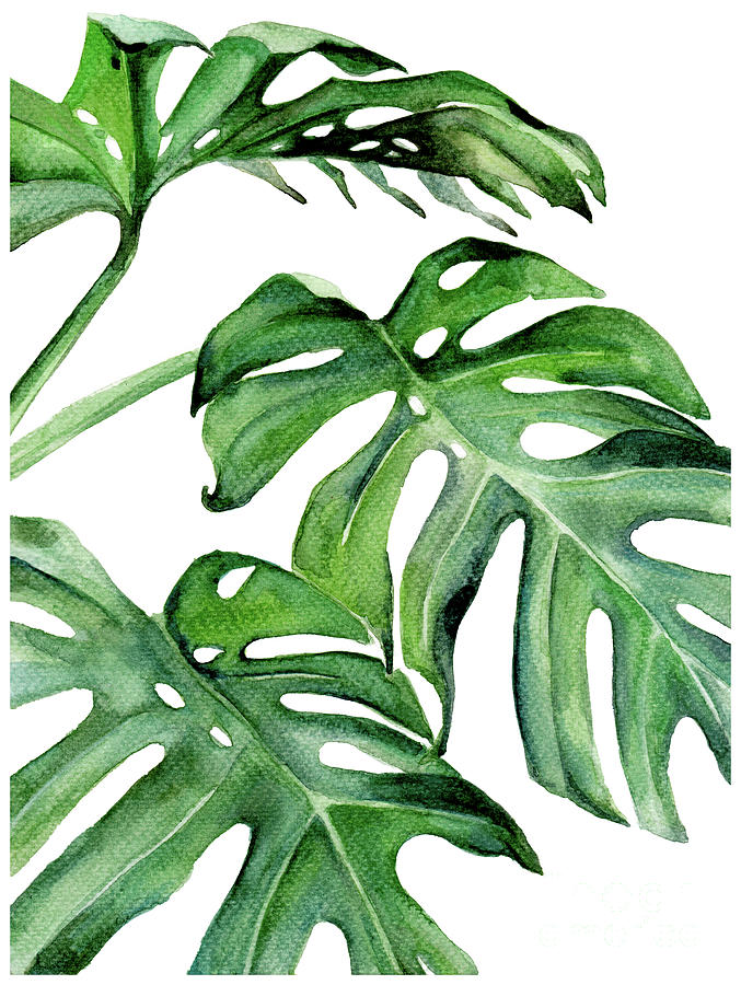 Tropical Leaf Iii Painting By Pdfdecor Wall Art Alibaba.com offers 1,513 painting tropical products. tropical leaf iii by pdfdecor wall art
