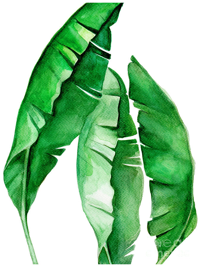 Tropical Leaf I Painting By Pdfdecor Wall Art Check out our tropical leaf paint selection for the very best in unique or custom, handmade pieces from our shops. tropical leaf i by pdfdecor wall art
