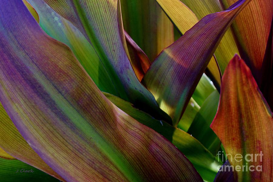 Colour Photograph - Tropical Leaves 1 by John Clark