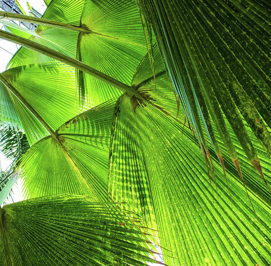 Summer Photograph - Tropical by Martin Newman