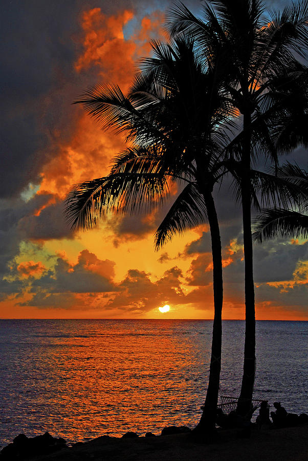 Paradise Photograph - Tropical Nights  by Lynn Bauer