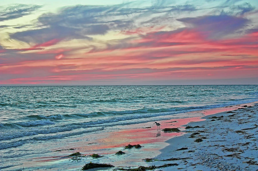 Tropical Nights On The Florida Gulf Coast by HH Photography of Florida