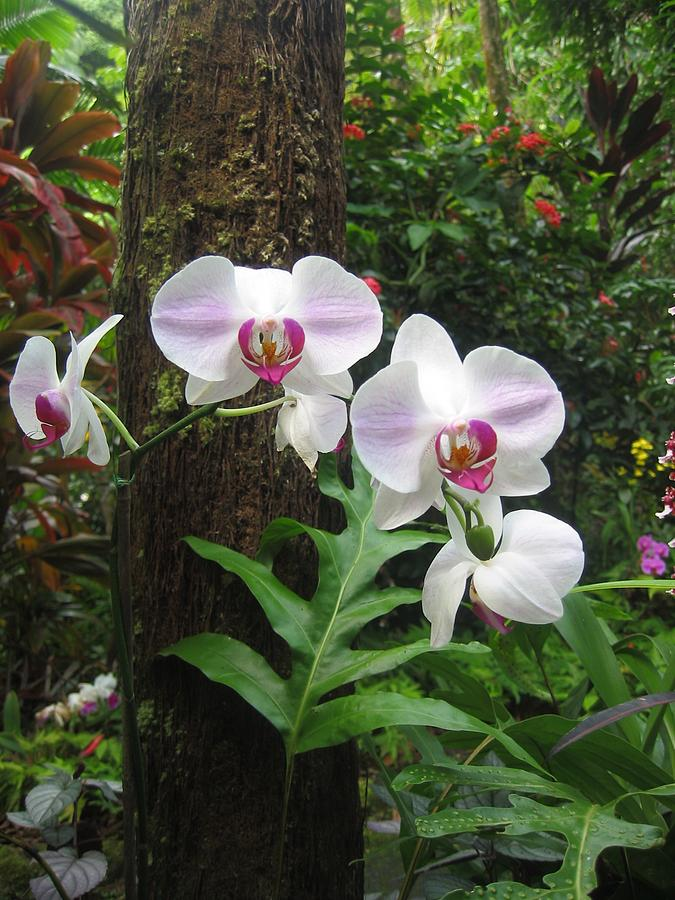 Orchid Photograph - Tropical Orchids by Halle Treanor