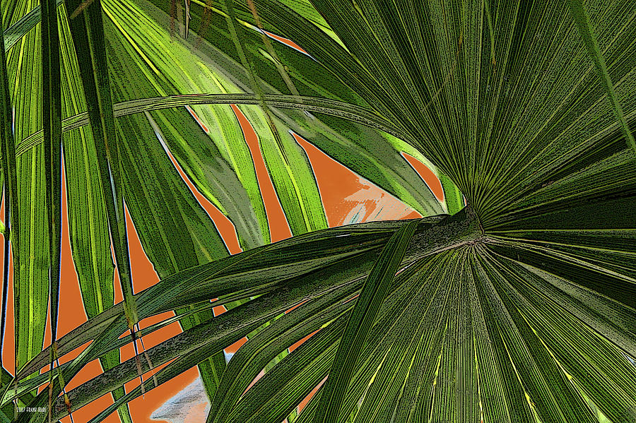 Key West Photograph - Tropical Palms 2 by Frank Mari