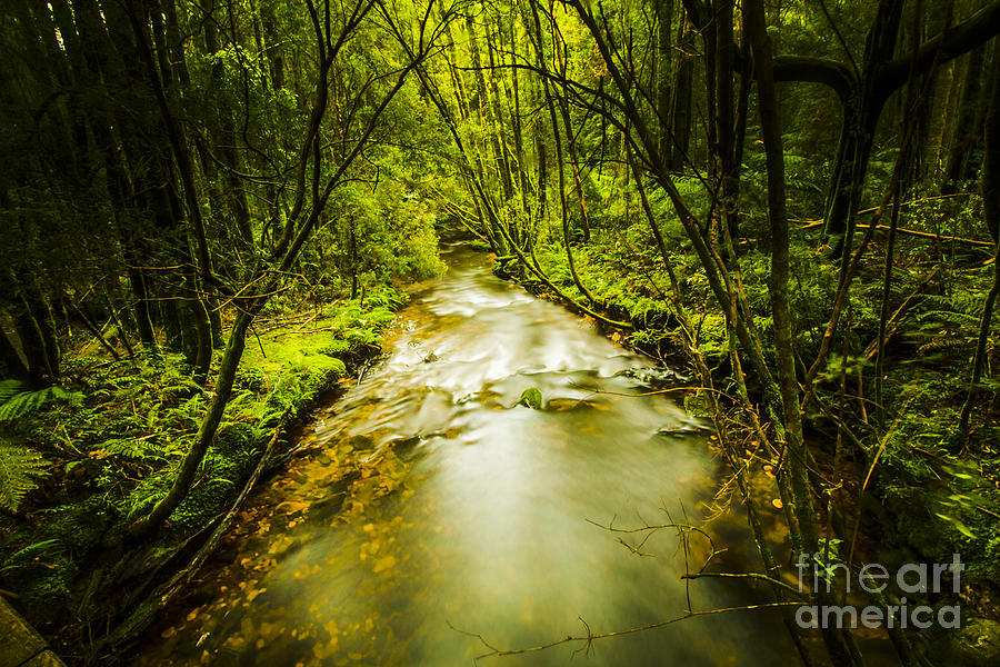 Rainforest Photograph - Tropical Rainforest Stream by Jorgo Photography - Wall Art Gallery