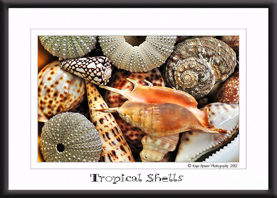 Greeting Card Photograph - Tropical Shells... Greeting Card by Kaye Menner