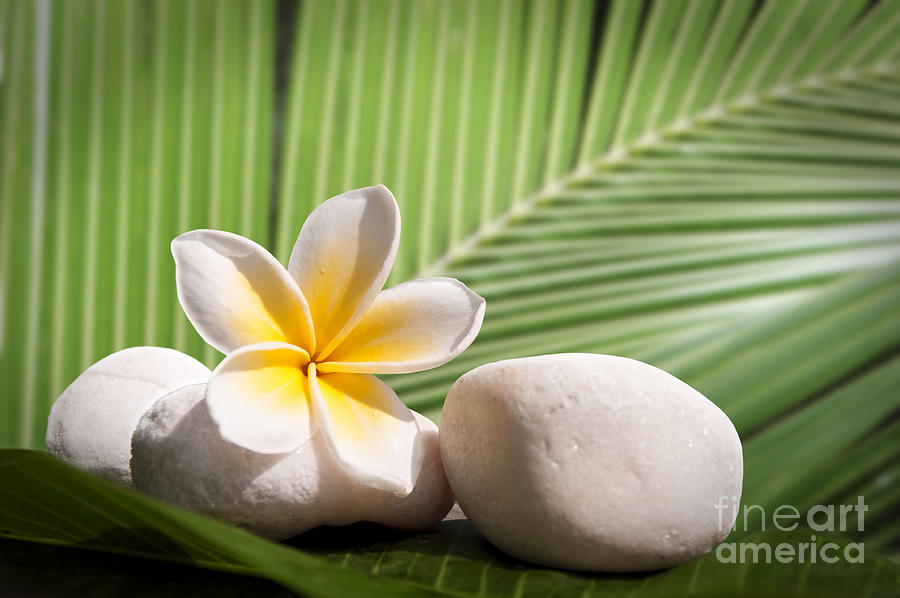 Tropical Still Life Photograph by Delphimages Photo Creations