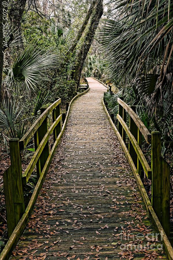 Tropical Walk by Susan Smith