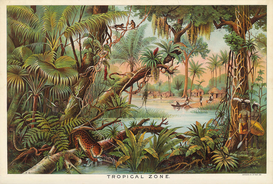 Tropical Zone - Illustrated Atlas - Old Historic Chart - Tropical Vegetation - Tribals Hunting Drawing