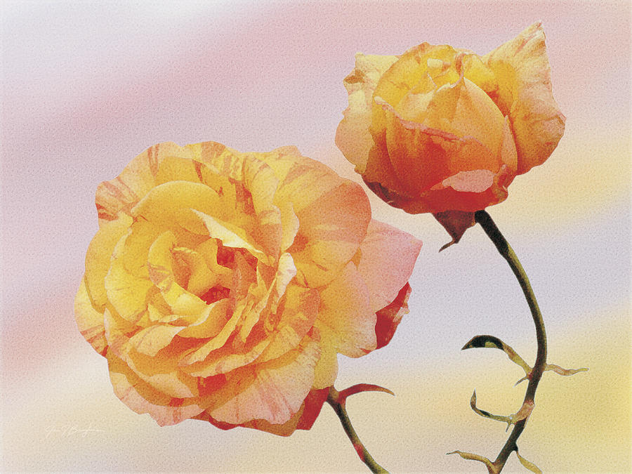 Roses Painting - Tropicana Roses by Jan Baughman