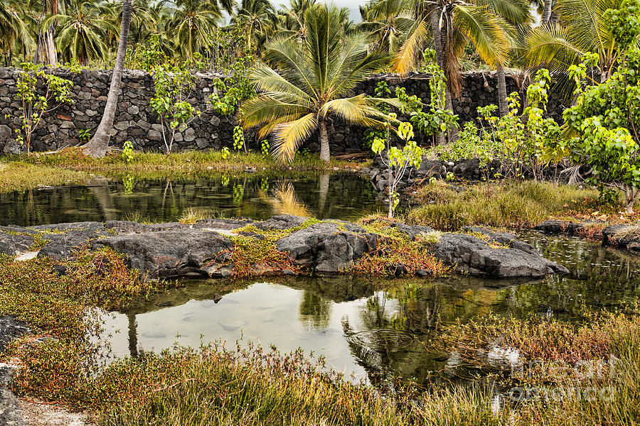 Hawaii Photograph - Tropics by Gary Ormont