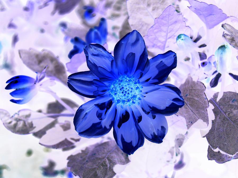 Floral Photograph - True Blue by James Granberry