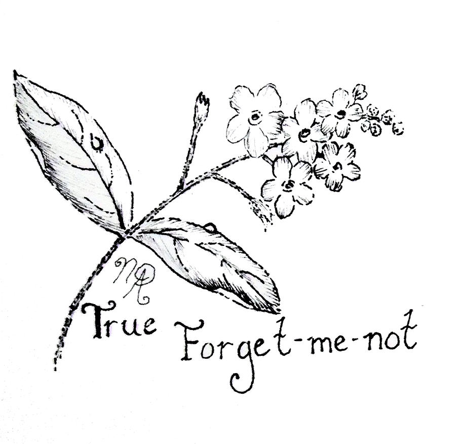 Forget-me-not Drawing - True Forget-me-not by Nicole Angell