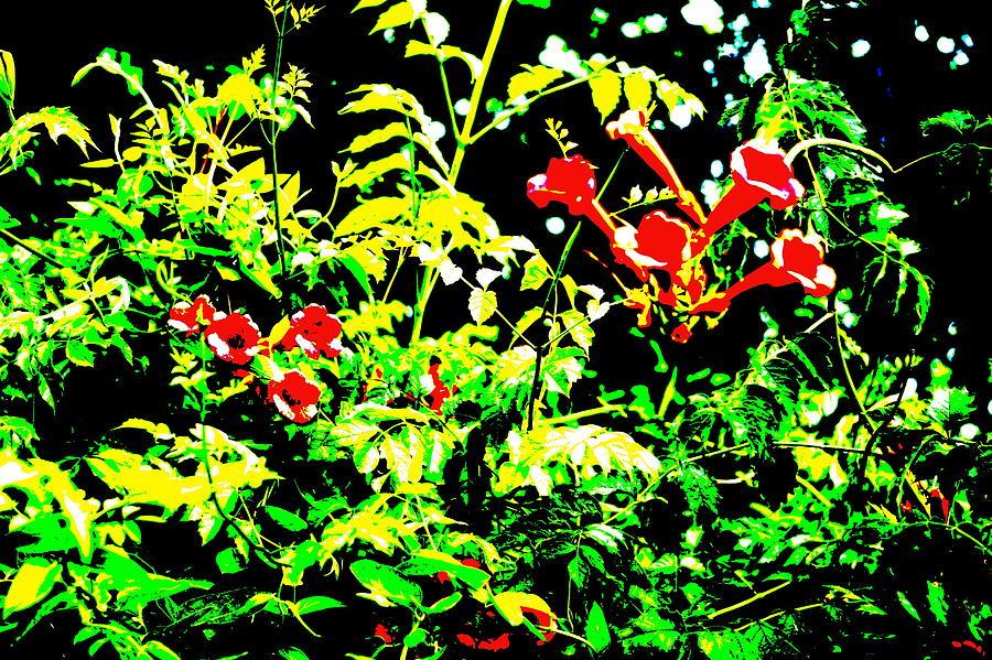 Trumpet Flower Bush Photograph By Beth Deitrick