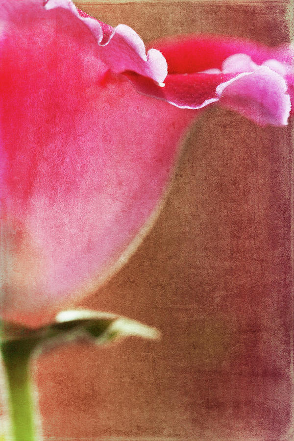 Flower Photograph - Trumpet by Rebecca Cozart