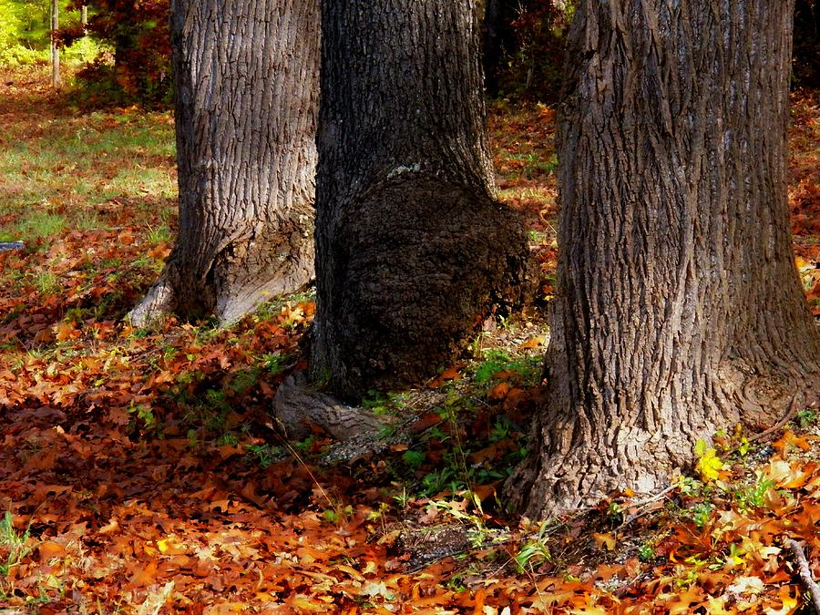 Autumn Photograph - Trunk And Leaves by Joyce Kimble Smith