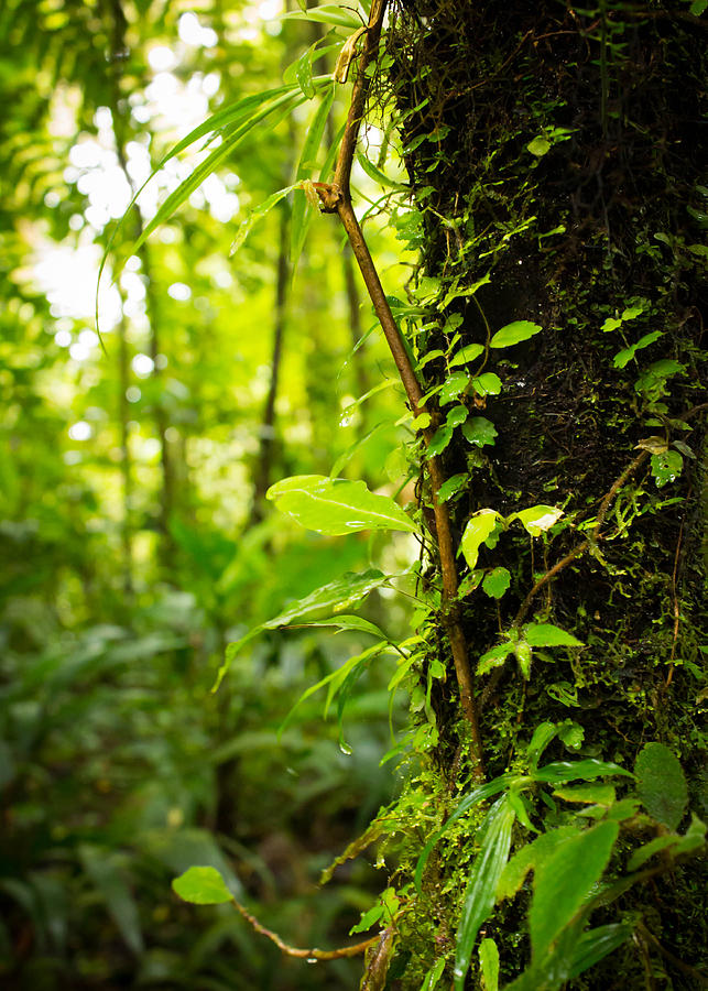 Jungle Photograph - Trunk of the Jungle by Nicklas Gustafsson