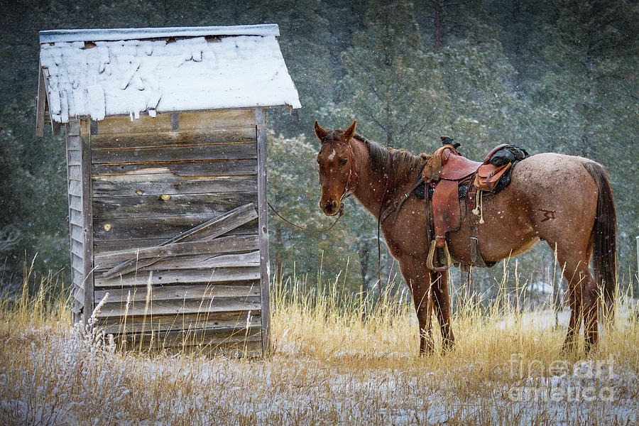 America Photograph - Trusty Horse  by Inge Johnsson