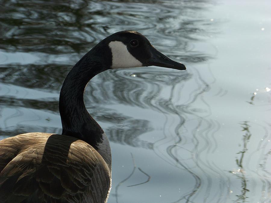 Bird Photograph - Truth  by Jessica Burgett