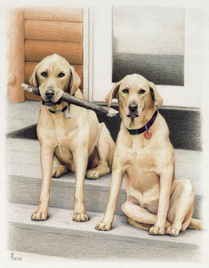 Dogs Drawing - Tucker And Lily by Amy S Turner