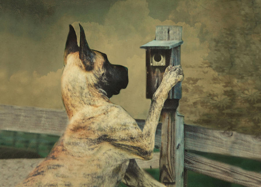 Great Dane Photograph - Tucker And The Birdhouse by Fran J Scott