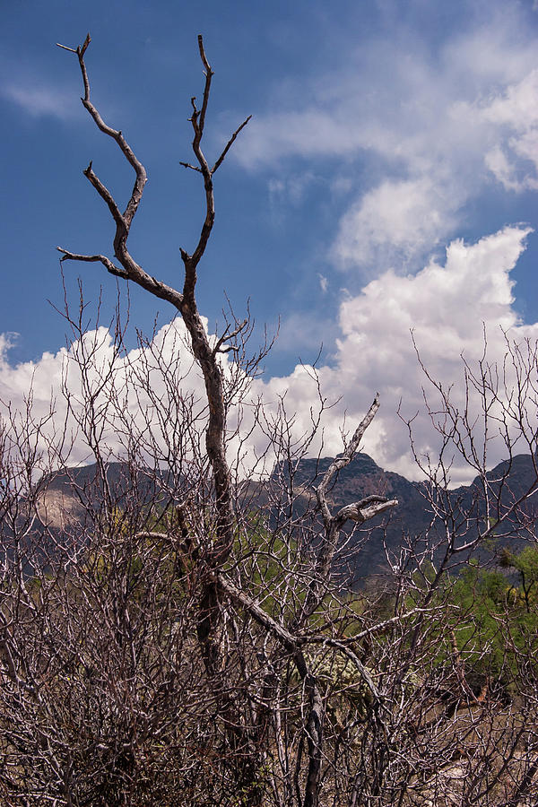 Tucson Arizona by David Palmer