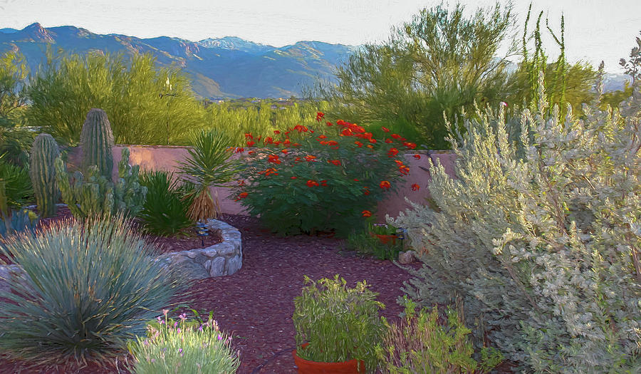 Tucson Garden Digital Painting by Randy Herring