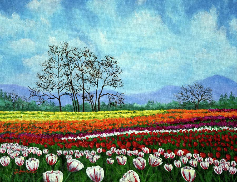 Tulip Fields Under White Fluffy Clouds by Laura Iverson