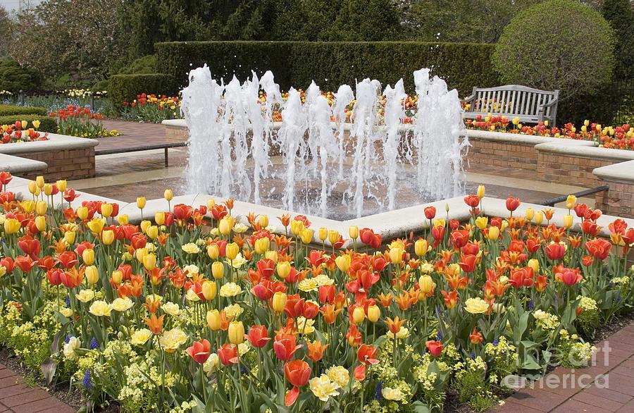 Fountains Photograph - Tulip Garden by Elvira Butler