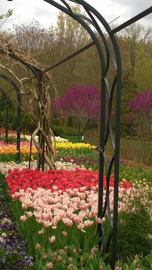 Tulips Photograph - Tulip Garden  by Gayle Miller