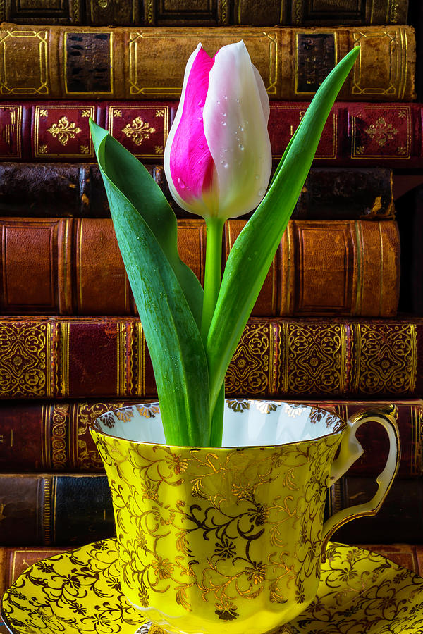 Old Photograph - Tulip In A Tea Cup by Garry Gay