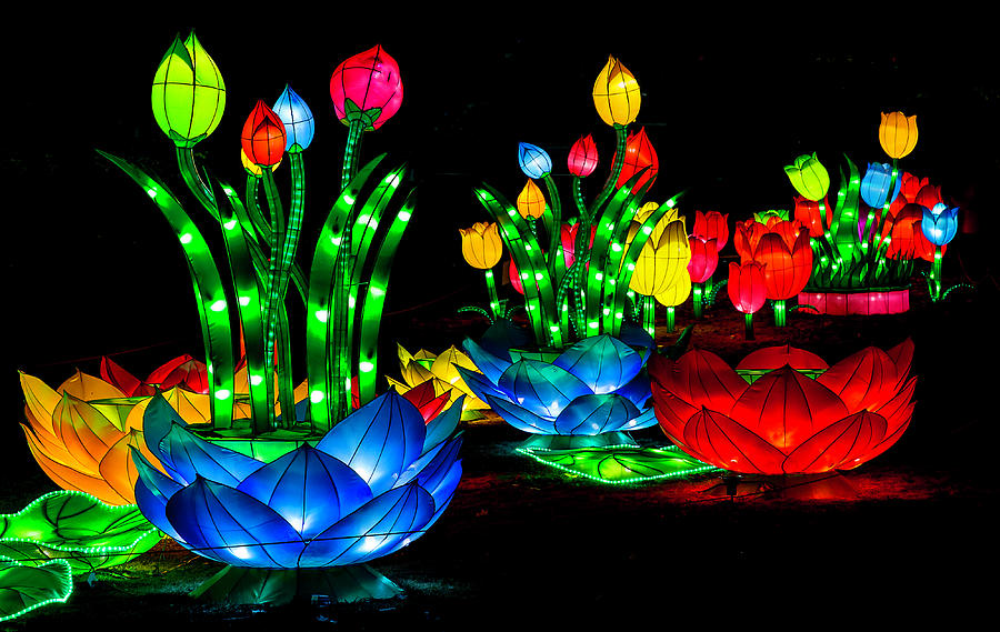Tulip Lanterns By George Herbert