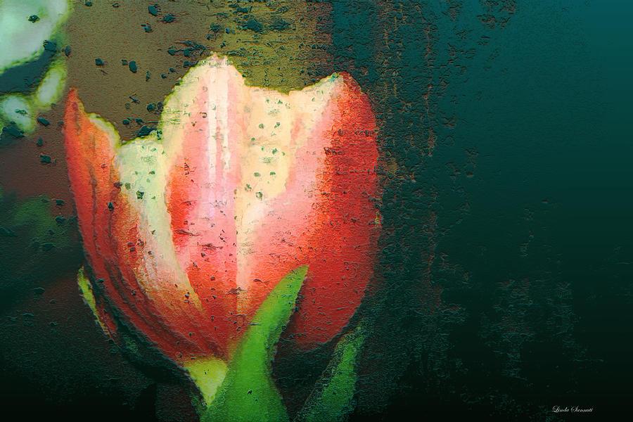 Tulip Photograph - Tulip Of Love by Linda Sannuti